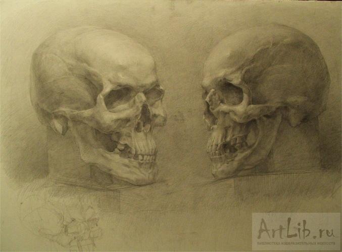 Рисунки карандашом черепа