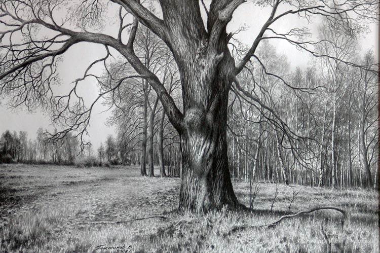 Названия деревьев и их листья Картинки Раскраски