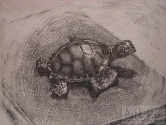 Картинки львенка с мультика львенок и черепаха 1