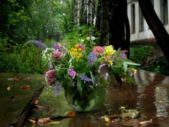 Высокорослые однолетние цветы для сада фото