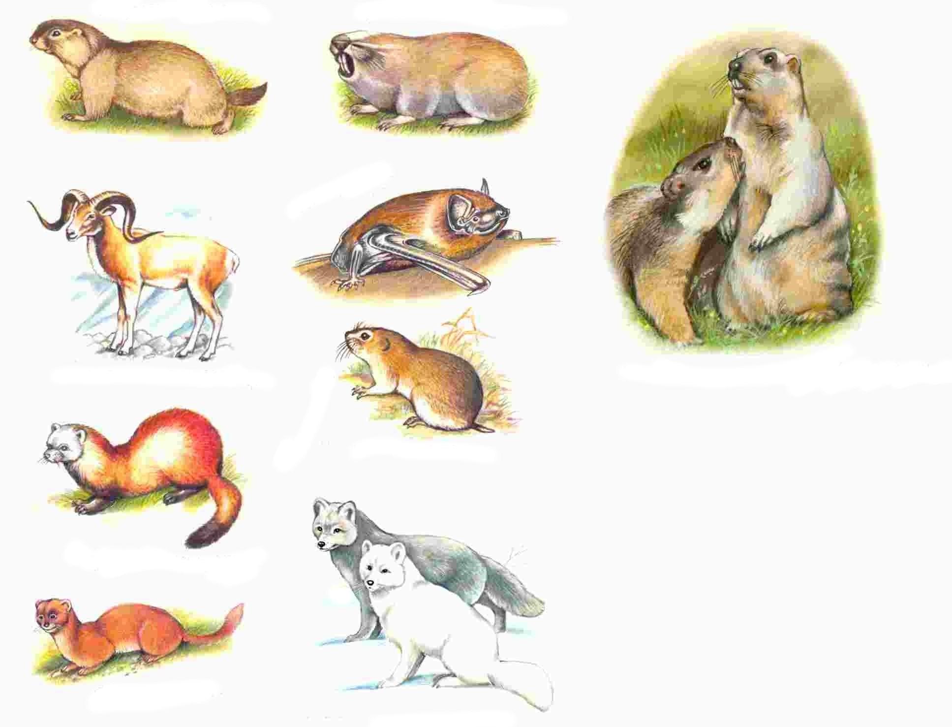 Животные которые занесены в красную книгу россии картинки 5
